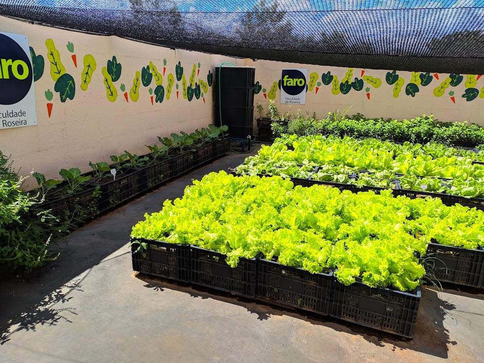 Nossa horta crescida e verdinha!
